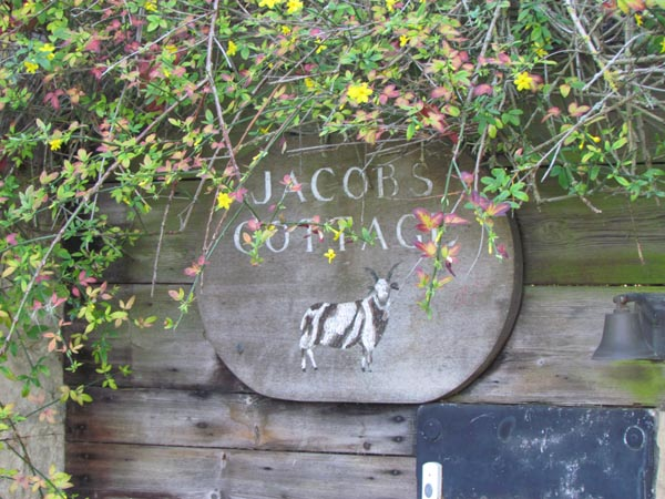 A small wooden sign, with yellow flowering jasmine growing round it, reads 'Jacob's Cottage' and shows a painted image of a black and white Jacob sheep with long horns.